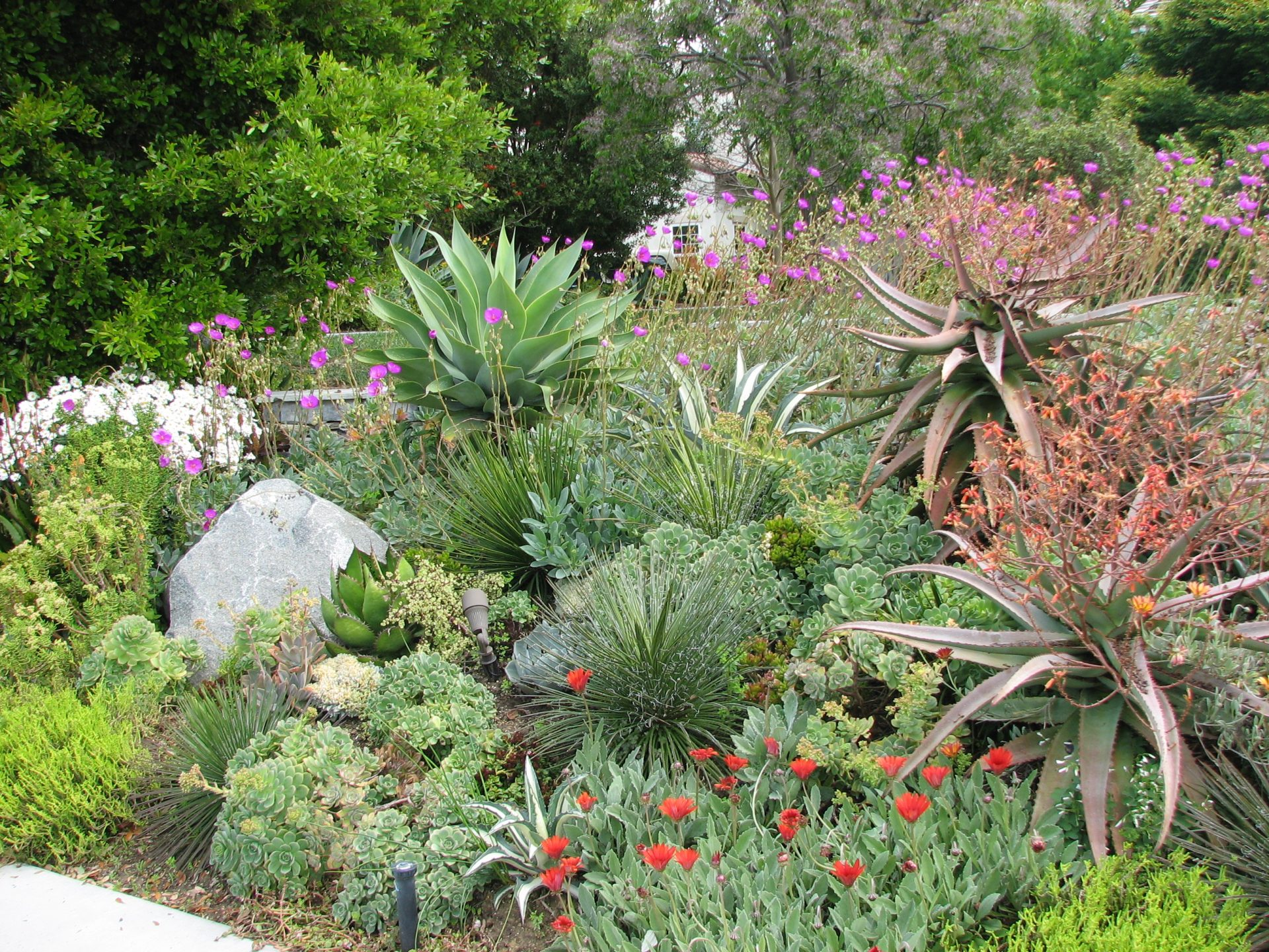 garden of water efficient plants