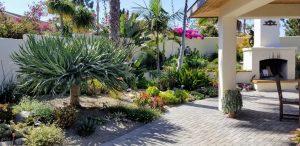 water-wise landscape succulent border on patio