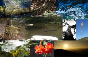 collage of 2018 photo contest entries